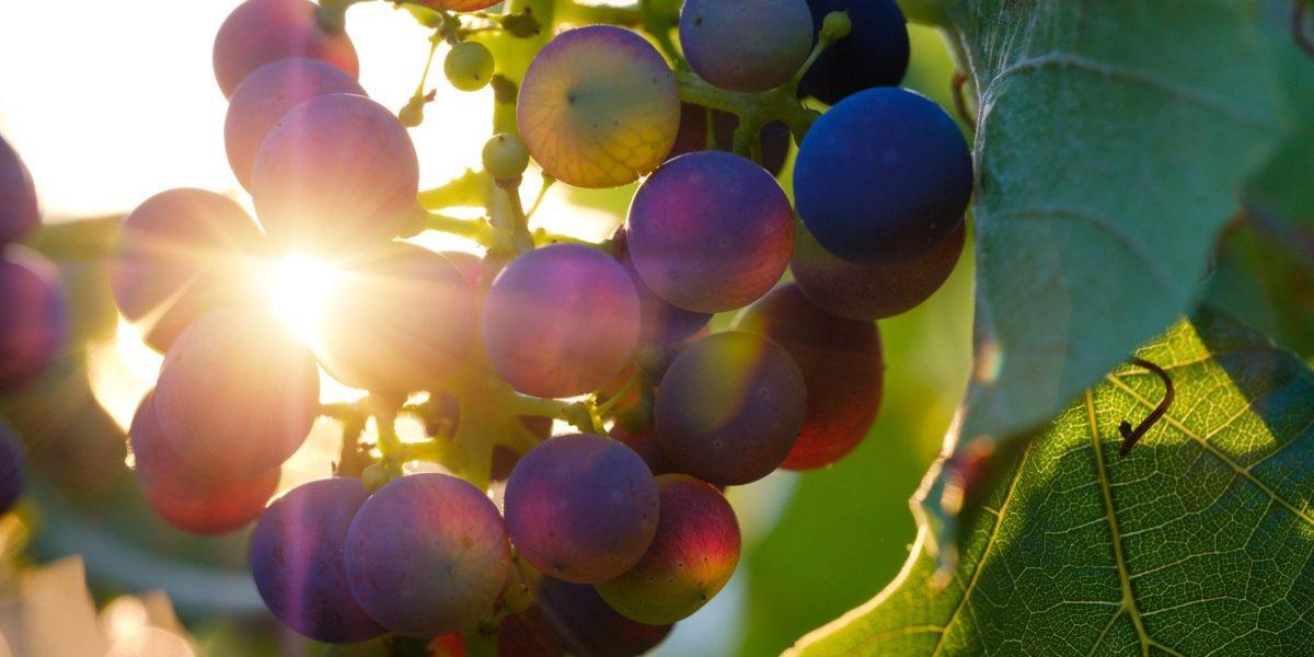 automne la naturopathie au fil des saisons
